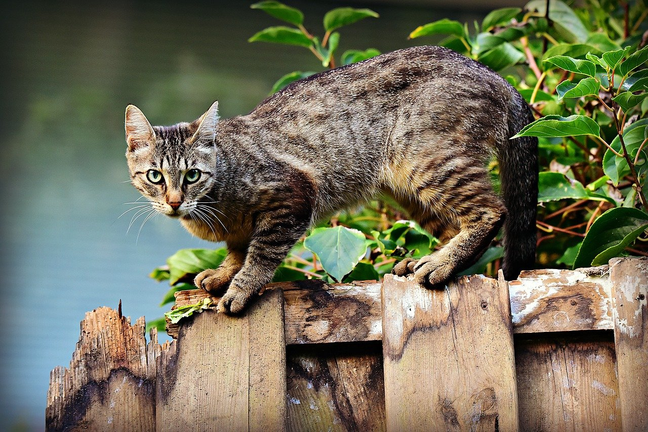 La extraña enfermedad que causa la muerte de los gatos
